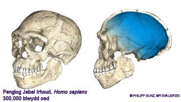 homosapiens_0607_main